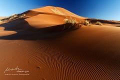 Five star dune