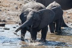 Planschender Elefant
